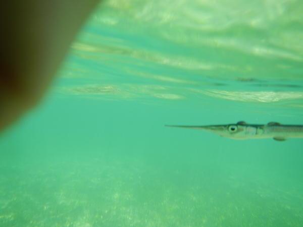 Mar Menor en 2013 con agua transparente. Antes de la contaminación del Mar Menor